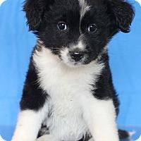Adopt A Pet :: Nevada - Waldorf, MD