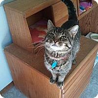 Adopt A Pet :: Hans - Grand Rapids, MI