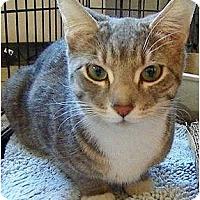 Adopt A Pet :: Fiona - Alexandria, VA