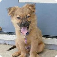 Adopt A Pet :: Peanut - Sacramento, CA