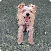 Adopt A Pet :: Paddington - Encinitas, CA