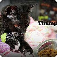 Adopt A Pet :: Thumper - Springfield, PA