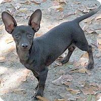 Adopt A Pet :: Ainsley - Camden, SC