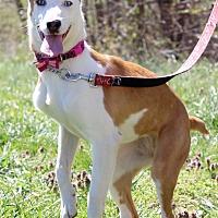Adopt A Pet :: Rain - Waldorf, MD