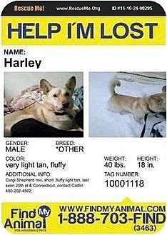 Shepherd (Unknown Type)/Corgi Mix Dog for adoption in Providence, Rhode Island - HELP FIND HARLEY