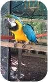 Macaw for adoption in Mantua, Ohio - CESAR