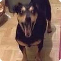 Adopt A Pet :: AJ - Higley, AZ