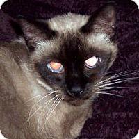 Adopt A Pet :: Kimmy - Summerville, SC