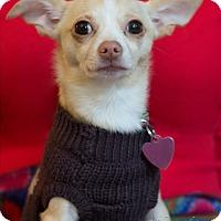 Adopt A Pet :: Flower - Vacaville, CA