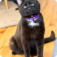 Adopt A Pet :: Reggie, the excellent cuddler - Chicago, IL