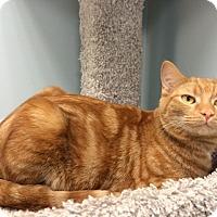 Adopt A Pet :: Calypso - Byron Center, MI