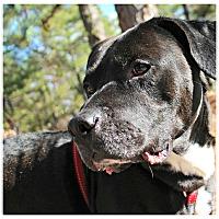Adopt A Pet :: Schwartz - Forked River, NJ