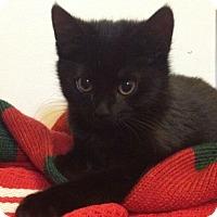 Adopt A Pet :: Iris - Reston, VA