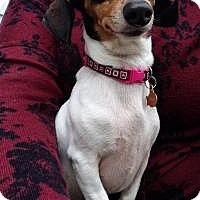 Adopt A Pet :: Lola - Marlton, NJ