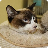 Adopt A Pet :: Snooker - Grass Valley, CA