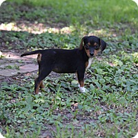 Adopt A Pet :: June Carter Cash - Groton, MA