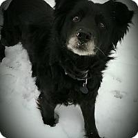 Adopt A Pet :: Princess - Sharon Center, OH