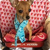 Adopt A Pet :: Tiki - Los Angeles, CA