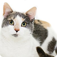 Adopt A Pet :: Miss Steele - New Castle, PA