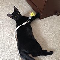 Adopt A Pet :: Christina - Marietta, GA