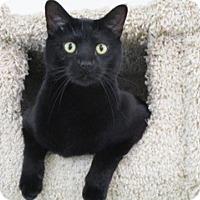 Adopt A Pet :: Spencer - San Carlos, CA