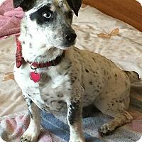 Adopt A Pet :: Simon MEET ME! - Westport, CT