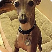 Adopt A Pet :: Aubrey in DFW Area - Argyle, TX