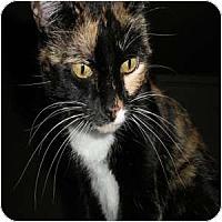 Adopt A Pet :: Ingrid - Phoenix, AZ