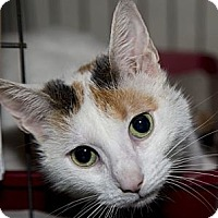 Adopt A Pet :: Ciara - Lombard, IL