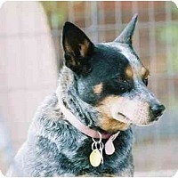 Adopt A Pet :: Dayzee Duke - Phoenix, AZ