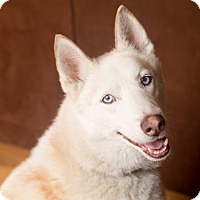 Adopt A Pet :: Blue - Wappingers, NY