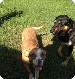 Boxer Mix Dog for adoption in Byron, Georgia - Ellie
