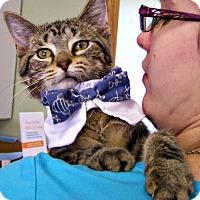 Adopt A Pet :: Frodo - Toledo, OH