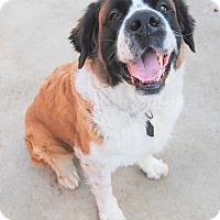Adopt A Pet :: Khaleesi - Bellflower, CA