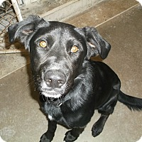 Adopt A Pet :: Bullet - Geneseo, IL