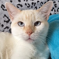 Adopt A Pet :: Sasha - Pasadena, TX