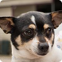 Adopt A Pet :: Nita - Daleville, AL