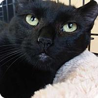 Adopt A Pet :: Luke - Belton, SC