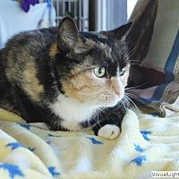 Adopt A Pet :: Zaboo - Westchester, CA