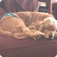 Adopt A Pet :: Leo 8yr - Mentor, OH