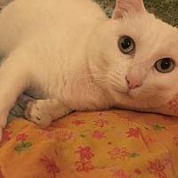 Adopt A Pet :: Zuri - Springfield, OR