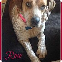Adopt A Pet :: Rose - Elburn, IL