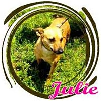 Adopt A Pet :: Julie - Orlando, FL