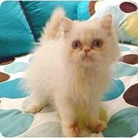 Adopt A Pet :: Pop - Beverly Hills, CA