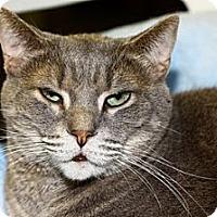Adopt A Pet :: Cartouche - Lombard, IL