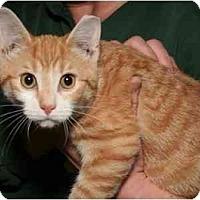 Adopt A Pet :: Duncan - Cincinnati, OH