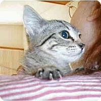 Adopt A Pet :: Tinkerbelle - Proctor, MN