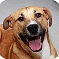 Adopt A Pet :: River - Jacksonville, FL