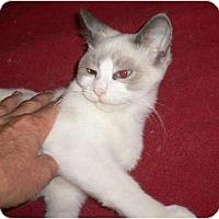 Adopt A Pet :: Da Baby - lake elsinore, CA