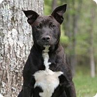 Adopt A Pet :: Bubba - Conway, AR